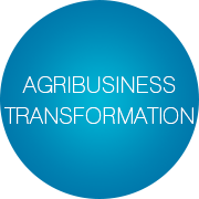 Agribusiness Transformation - Infopulse